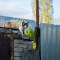 все коты в Кирсанове - породистые)), Кирсанов