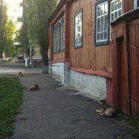 уличная охрана, Кирсанов