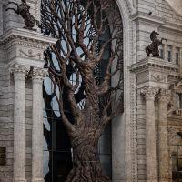 дерево  у  дворца земледельцев,казань, Казань