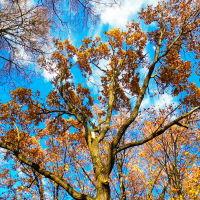 #Болохово Разноцветными красками брызнула осень, немного неровно легла акварель; А мы – теплокровны: тепла дальше просим и лета чуть больше, хоть пару недель..., Болохово