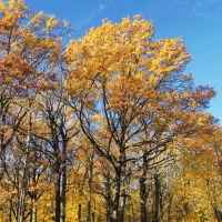 Уж небо осенью дышало..., Болохово
