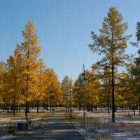 парк, Надым
