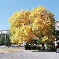 Фото #521871, Алчевск