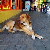 г Ровно - Пёсик возле кафе, Ровно