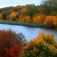 На Бериславщине сохранились плавни Днепра - острова, заросшие кустами, деревьям., Берислав