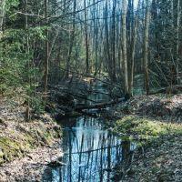 Лісова річечка, Маневичи