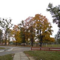 Парк, Маневичи