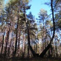 ліс, Маневичи