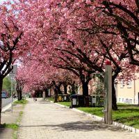 Blütenzauber, Хемниц