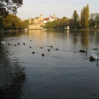 Swans and Ducks, Бернбург