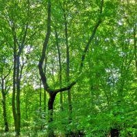 Baum im Klemmberg Park Weißenfels, Вейссенфельс