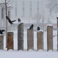 7 Raben im Schneegestöber [2013], Вейссенфельс