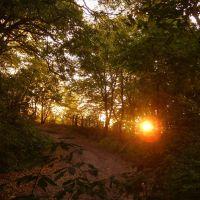Sonnenuntergang auf dem Hummelberg, Зейтз