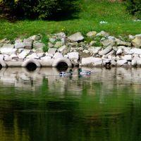 Enten auf der Saale, 2007, Мерсебург