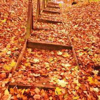 **Unten angekommen ?- Es geht auch im Herbst wieder bergauf!**, Вернигероде