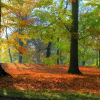 Herbst im Stadtpark, Гота