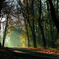 Herbst auf dem Seeberg, Гота