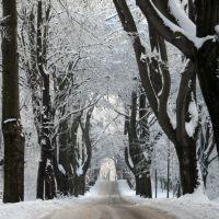 Schwarz-weiß - die Allee im Winter, Гота