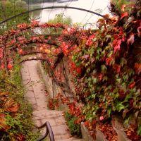 Aschaffenburg: Herbstlicher Wein an der Mainpromenade, Ашхаффенбург