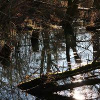 Bachlauf im Wildgarten, 01.2014, Фурт