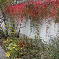 Herbstliche Mauer, Хоф