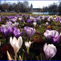 Frühlingserwachen im Karlsruher Schlossgarten, Карлсруэ