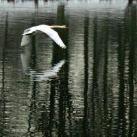 swan lake, Ульм