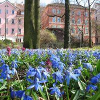 Alter Botanischer Garten Tübingen, Фрейберг