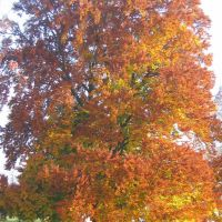 Im Herbst, Фридрихсхафен