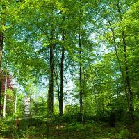 Schatten spendende Bäume, Филлинген-Швеннинген