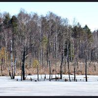 """120301-038 """"highmoor frozen"""", Филлинген-Швеннинген"""
