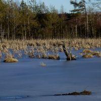 2011-12-27 Winterimpression im Schwenninger Moos 2, Филлинген-Швеннинген