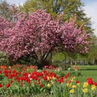 Wiesbaden im Park, Висбаден