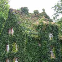 Gießen - Das grüne Haus, Гиссен