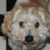 Mr. T  the Dog !, Гиссен