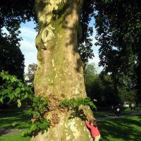 Giant TREE!!, Дармштадт