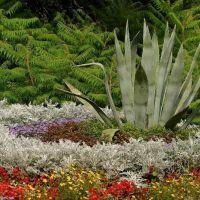 Blumenbeet auf Siebenbergen, Кассель