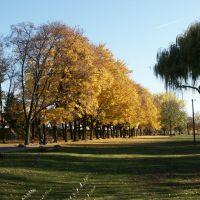 Goldener Herbst am Mainufer, Оффенбах