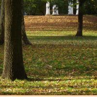 Autumn colours, Оффенбах
