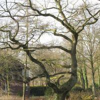 Baum Delmenhorst Park, Дельменхорст