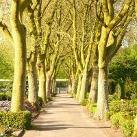 Nordhorn - Friedhof am Heseper Weg, Нордхорн