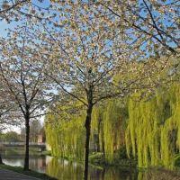 blütenpracht, Нордхорн