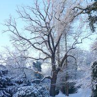 Winter im Schloßgarten, Олденбург