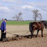Feldbestellung in Altenbücken (landkreis Nienburg/Weser), Селл