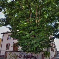 Schöner Baum in der Weberstraße, Кайзерслаутерн