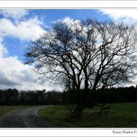 Unterwegs im Hunsrück - Raststätte auf dem Weg nach Maitzborn, Людвигшафен
