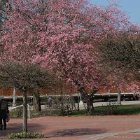 Frühling am Gradierwerk, Бад-Зальцуфлен