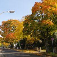 Feldstraße im Herbst, Бергиш-Гладбах