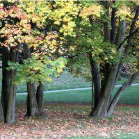 Herbstliche Baumgruppe in der Schmechtingwiese, Бохум