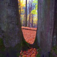 Bäume im roten See - Trees In The Red Sea (Herbstfarben aus der Ruhr Metropole), Весел